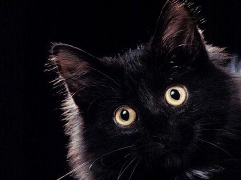 שמעה ראשונה על שיטת העריכה של הסרט. החתולה עפרה