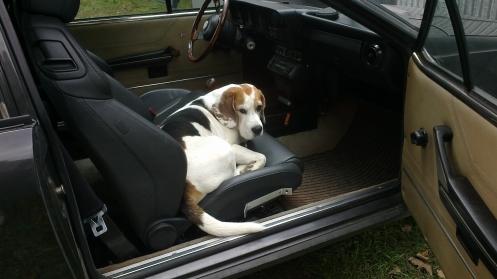 Max in the Alfa GTV